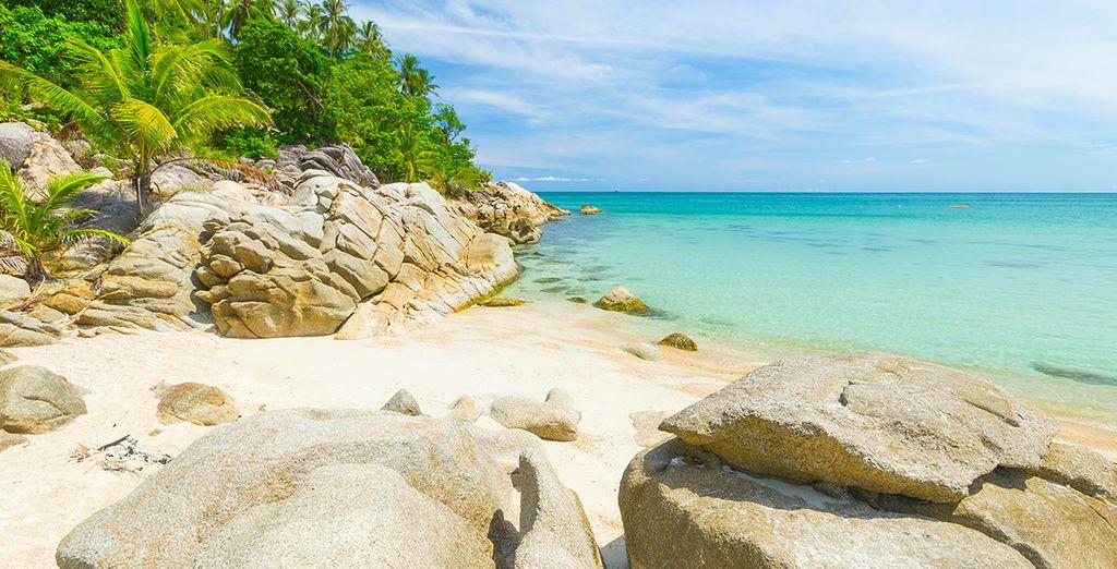 Lézardez sur les plages de l'île