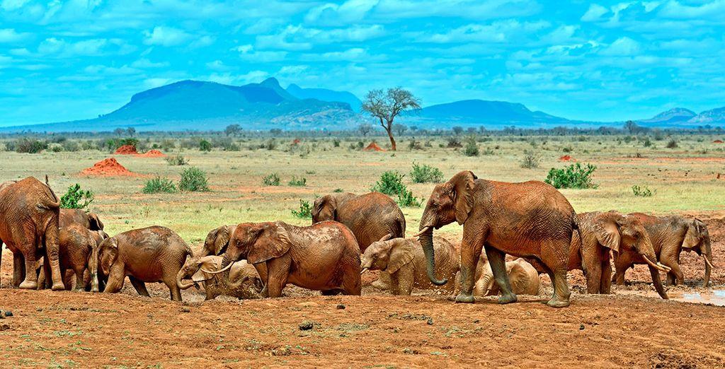 Entdecken Sie die Wildnis Kenias bei einer Safari