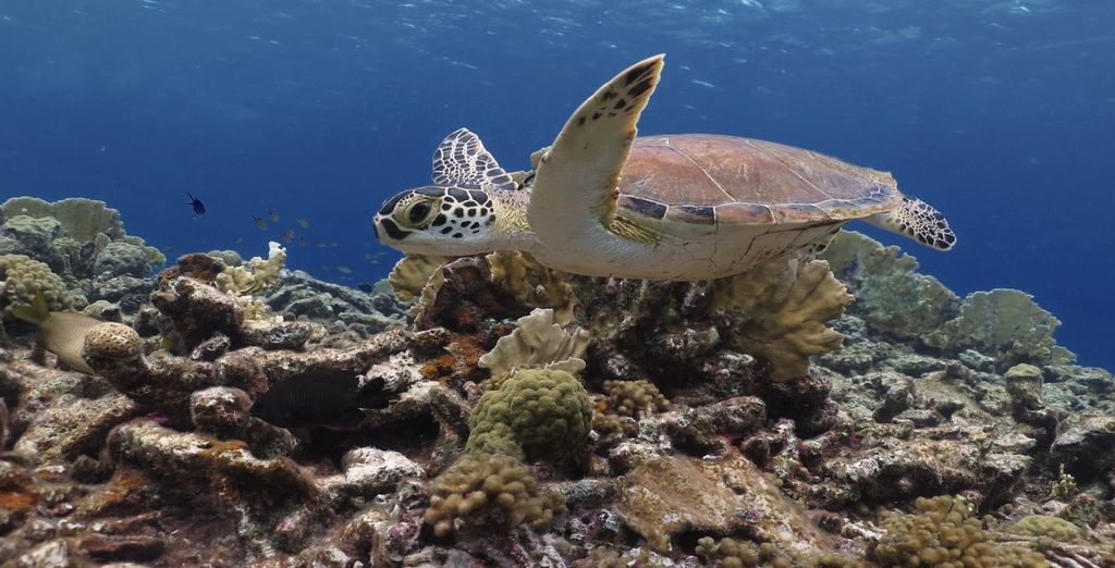 Entdecken Sie die Unterwasserwelt von Bonaire!