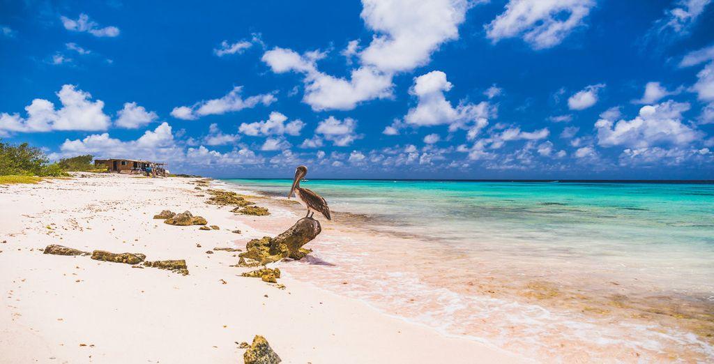 Erholsame Ferien auf Bonaire!