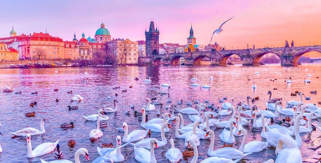 Ideale für einen romantischen Städtetrip oder Urlaub mit der Familie