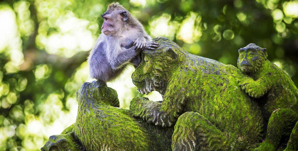 Sehen Sie Affen in freier Wildbahn