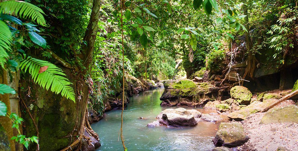 Bevor Sie in den Dschungel des Nordwestens der Insel eintauchen
