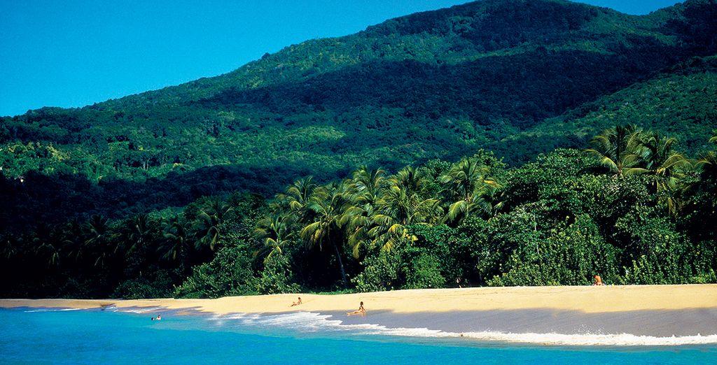 Genießen Sie einen tollen Aufenthalt auf der Schmetterlingsinsel