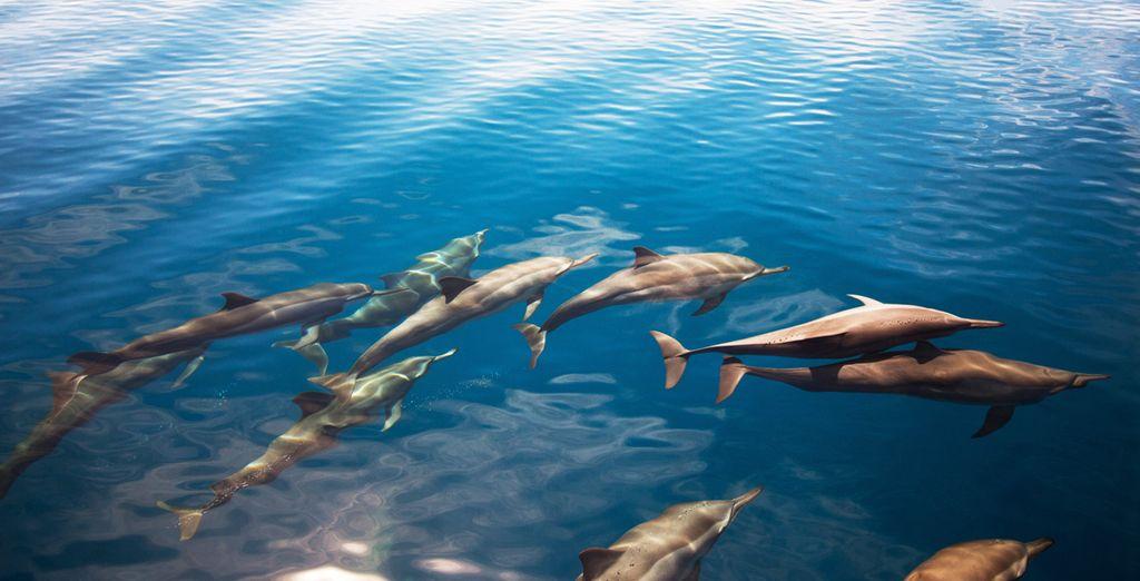 Schwimmen Sie mit Delfinen