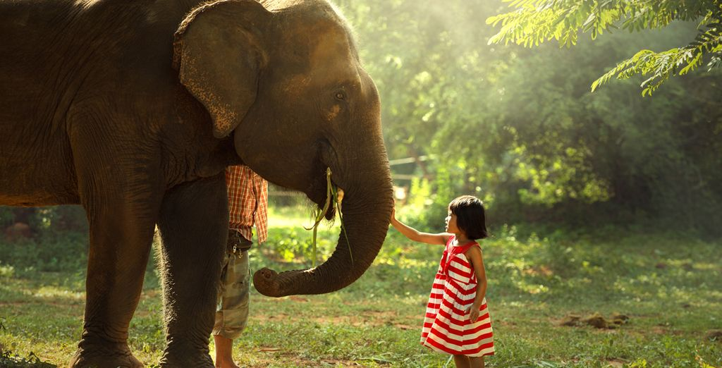 Elefantenwaisenhaus Pinnawela - Sri Lanka