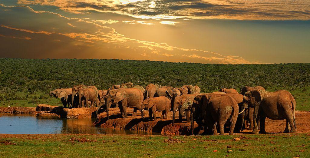 Entdecken Sie den National Elephant Park für ein unvergessliches Erlebnis