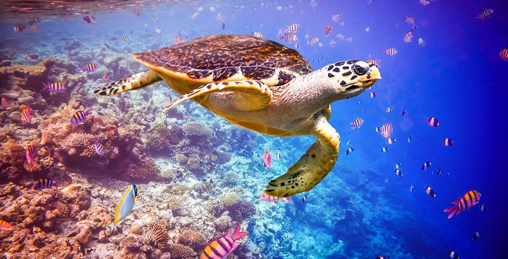Buchen Sie Ihren unvergesslichen Urlaub auf den Malediven
