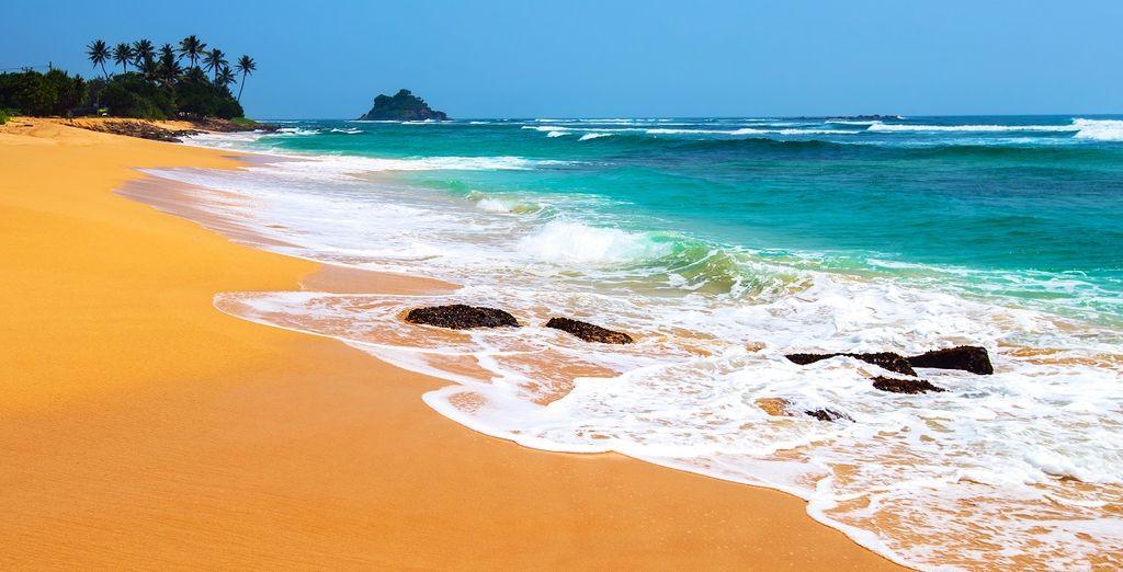 Surfen Sie an den Stränden Sri Lankas.