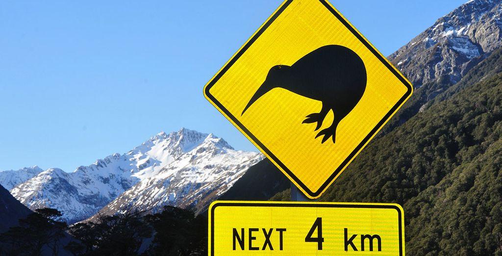 Buchen Sie Ihre Reise nach Neuseeland online