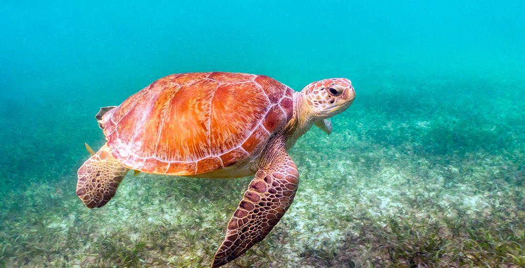 Conoce el fondo marino reservando una práctica de snorkel en Tulum
