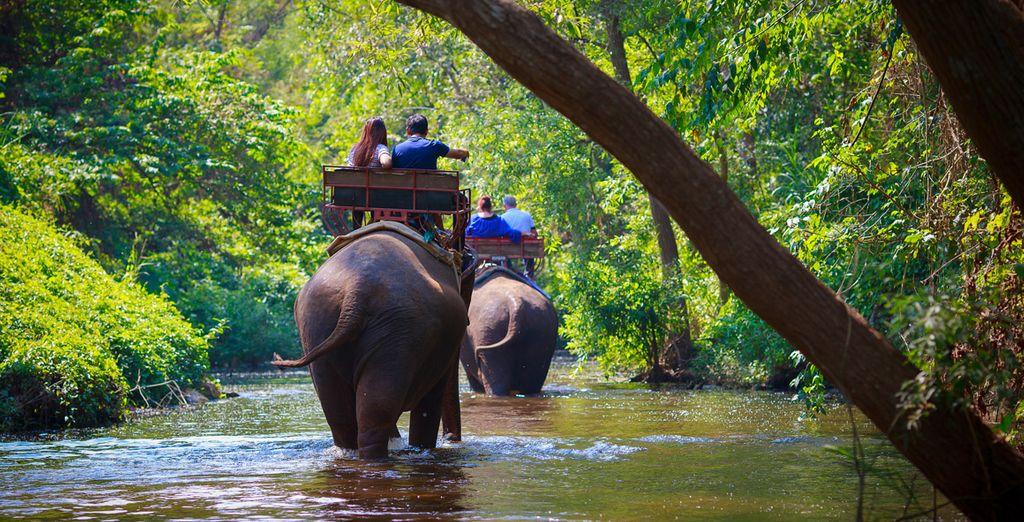 El 8ª día visitarás el Mae Sa Elephant Camp donde tendrás la posibilidad de dar un paseo a lomos de un elefante