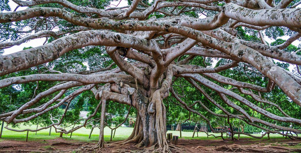 Visita el Royal Botanical Gardens en Peradeniya