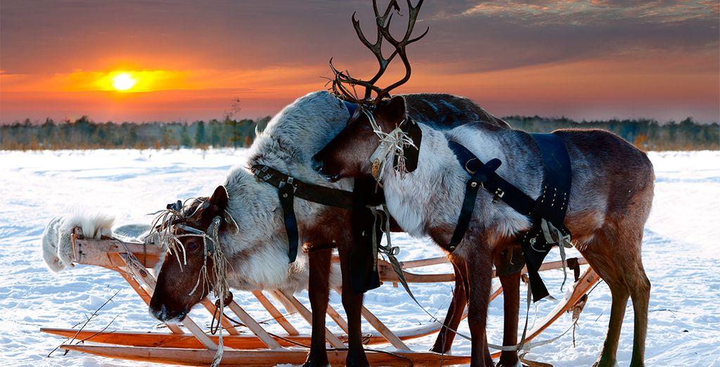Un lugar que se convierte en mundo mágico de elfos y renos