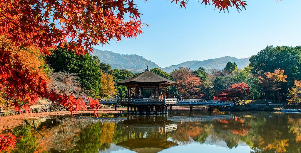 En su día 3 visitará el Parque Nara, un bello entorno natural dentro de la ciudad