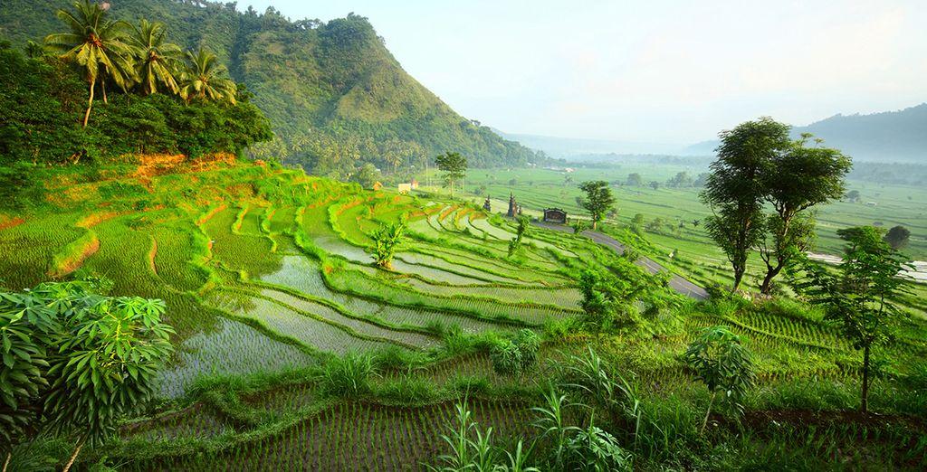 Un viaje inolvidable que le llevará a la fascinante isla de Bali
