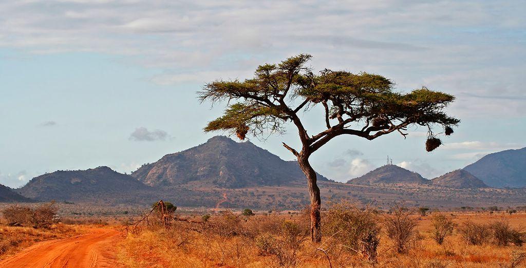 Elija entre una de las dos opciones de safari que le proponemos