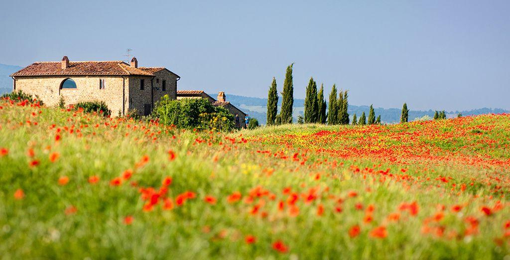 Precioso campos de flores