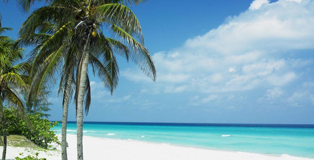 Disfruta de unas playas paradisíacas