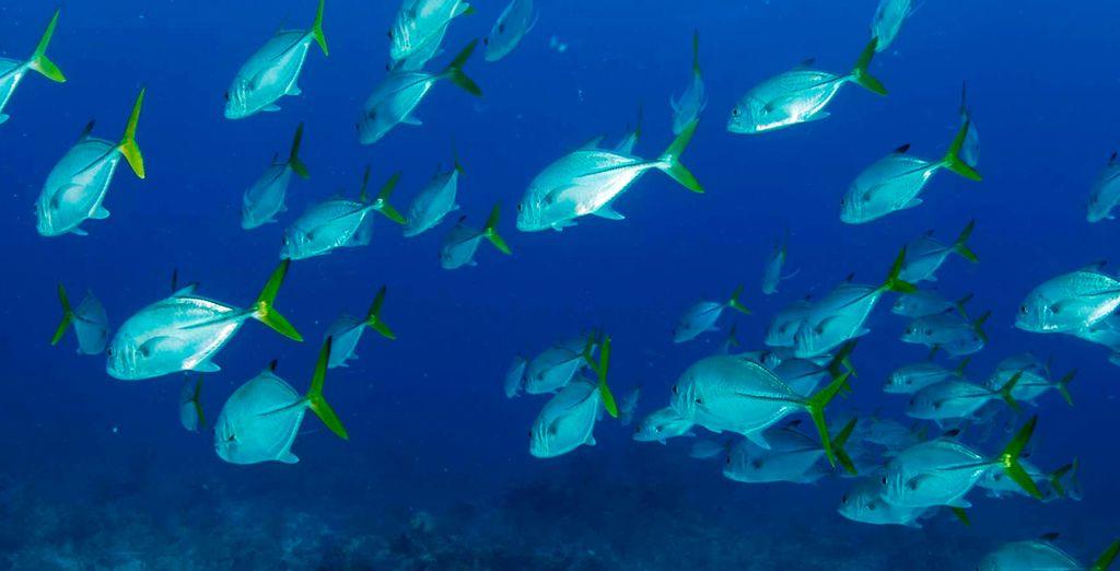 Descubre su exótica y colorida fauna y flora marina