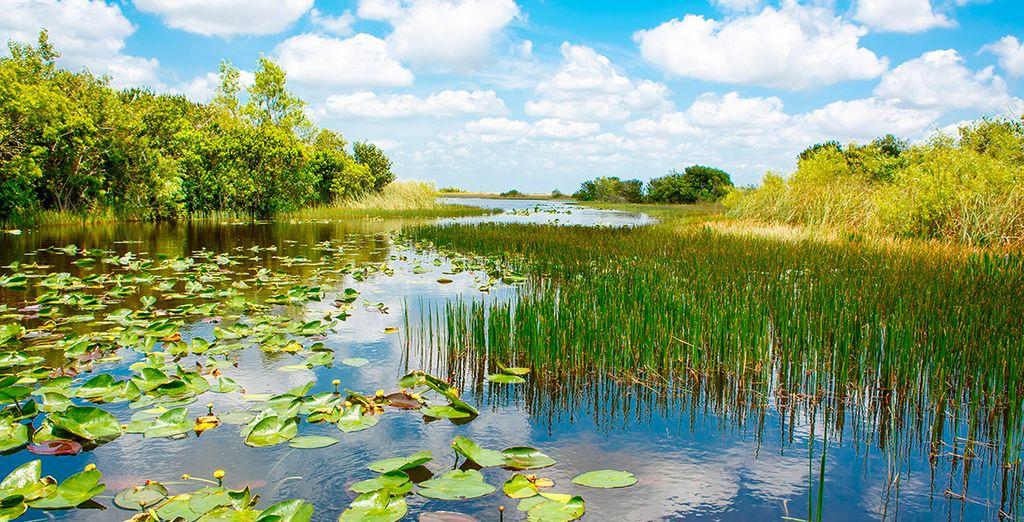 Visitarás el Parque Nacional de los Everglades