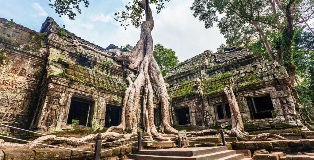 El Templo Ta Prohm, caracterizado por sus enormes arboles con raíces gruesas que enredan sus paredes