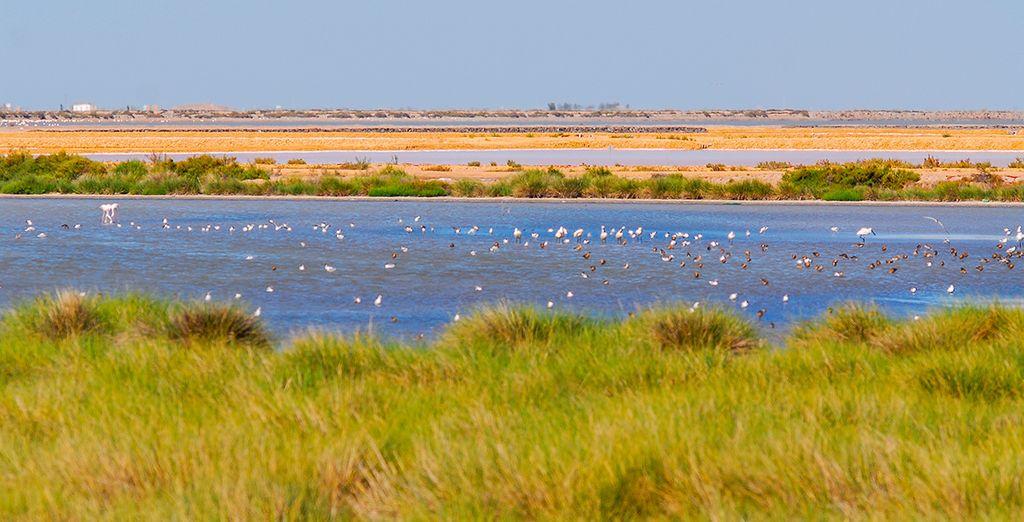 Disfruta del Parque Nacional de Doñana