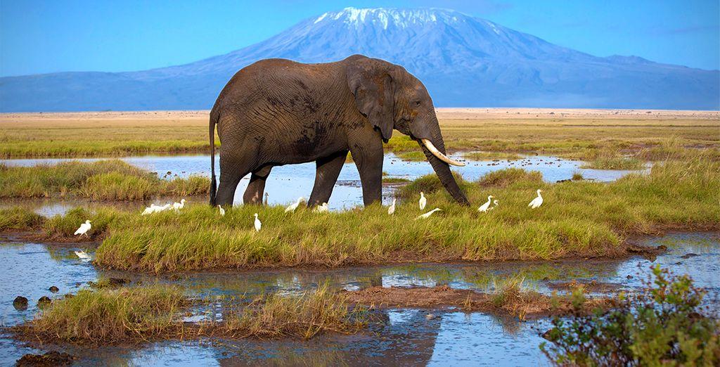 Si el día está claro, podrás observar la inmensidad del Monte Kilimanjaro