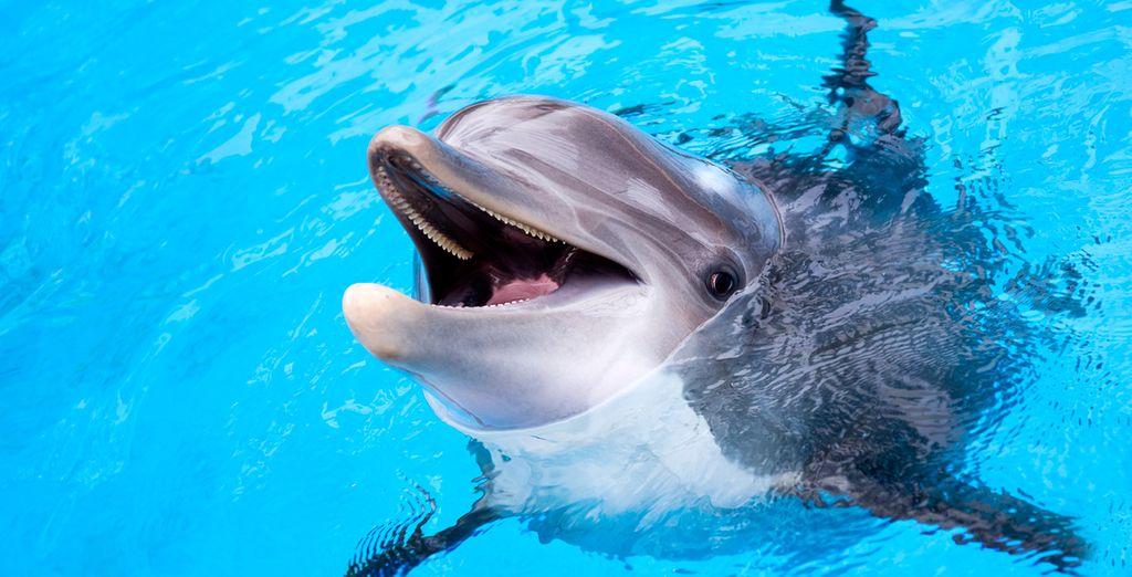 Podrás navegar con delfines si lo deseas