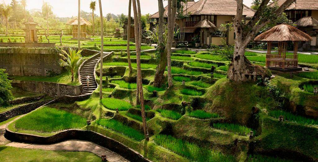 Junto a los arrozales tan característicos de la isla