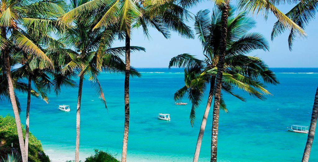 Comenzarás tu aventura en las hermosas playas de Diani