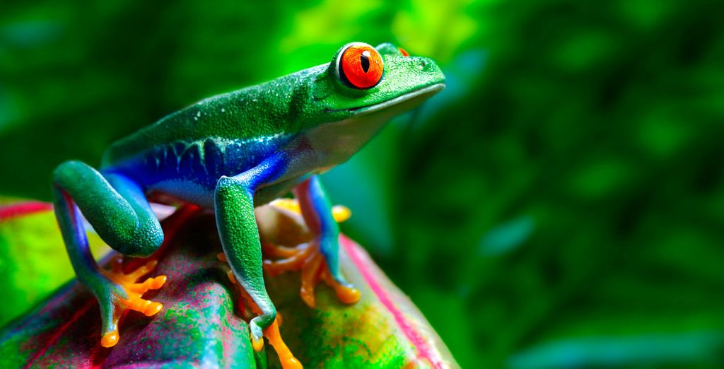 La belleza de Costa Rica, su fauna y flora te están llamando