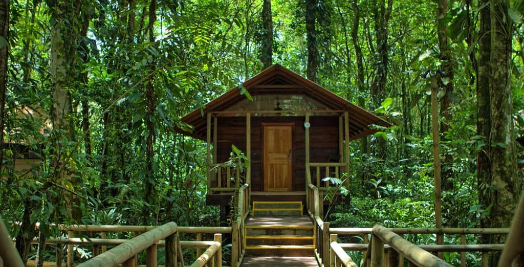 Tu estancia en Tortuguero podrá ser en Evergreen Lodge 4*