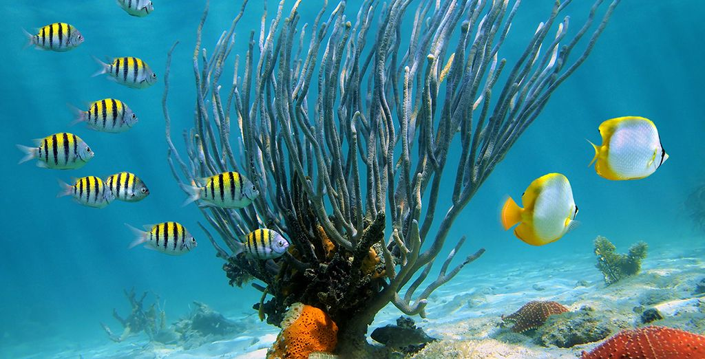 ¡Y descubre el fondo marino!