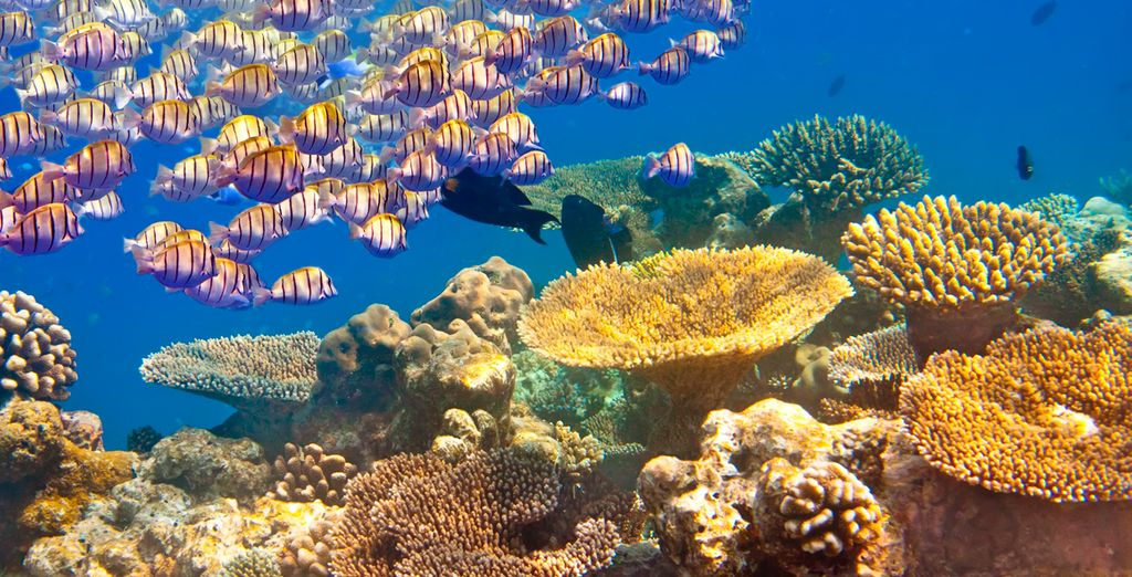 Guia de Viaje En la isla de Mauricio