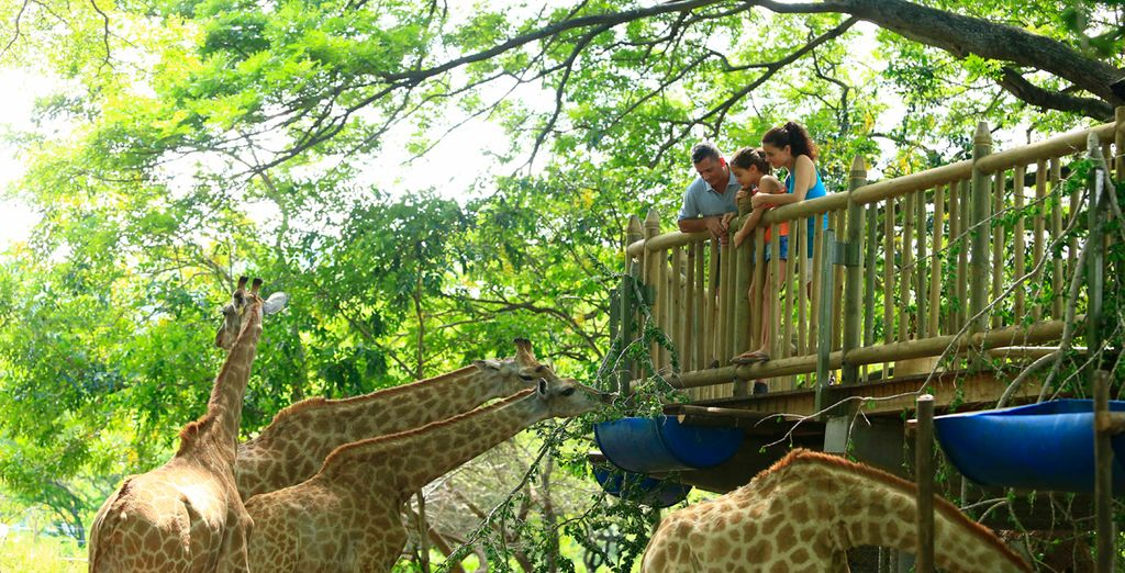Además te incluimos una entrada por persona para visitar el Parque de Aventuras Casela