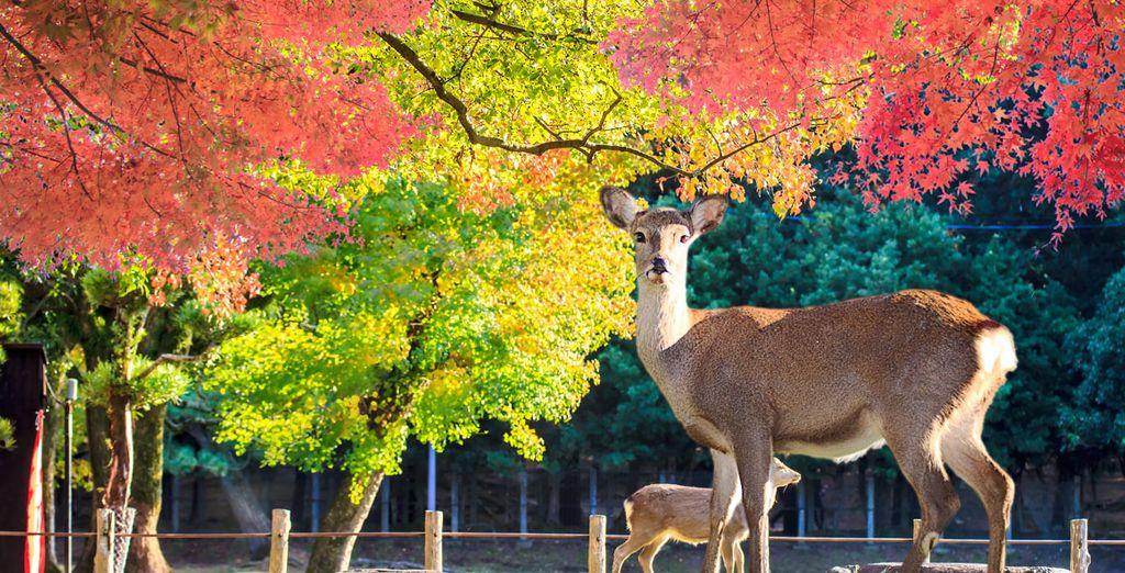 Conocido también como el Parque de los Ciervos Sagrados