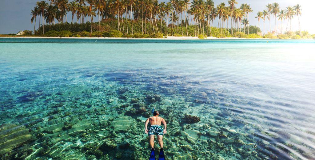Practica snorkel y admira la fauna marina