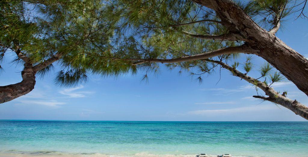 Niché au bord de la mer des Caraïbes