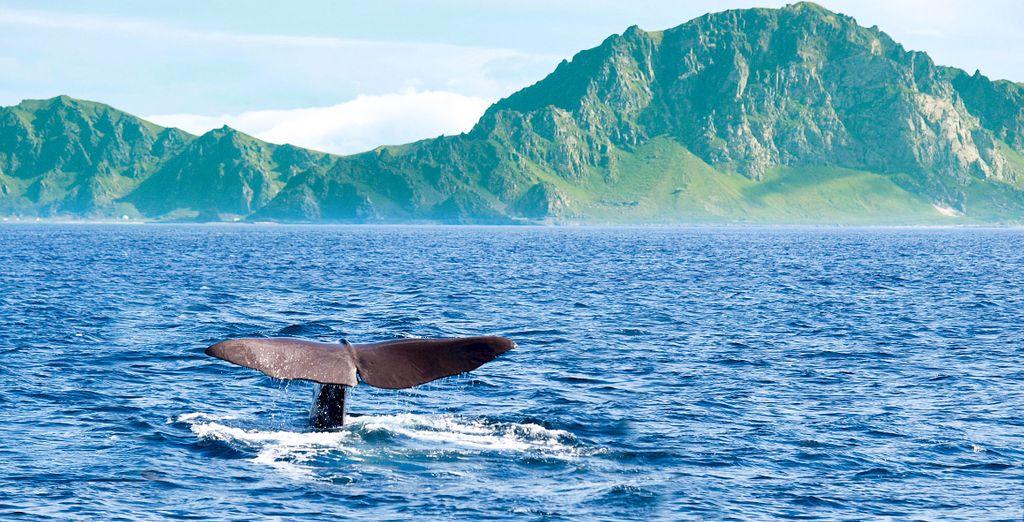 Paysage de la Norvège et découverte des baleines