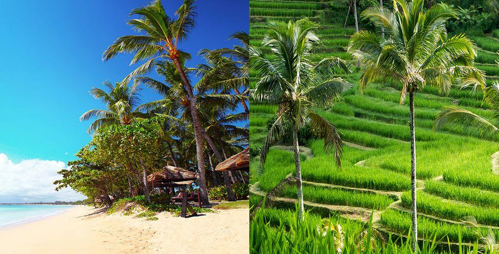 Prêt à vivre le voyage de votre vie ? - Combine Hotel Furama Villas & Spa & The Chedi Sakala Bali