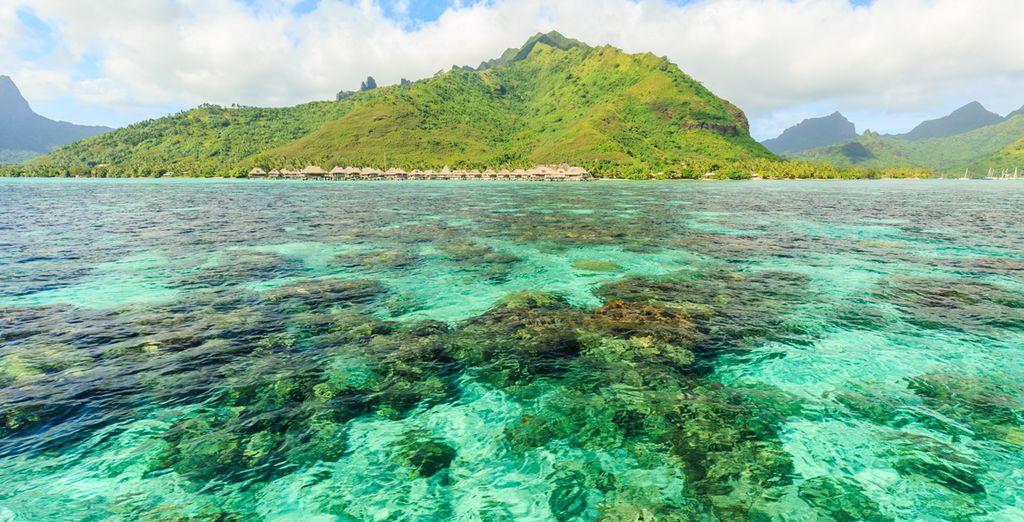 Passez des vacances de rêve à Tahiti