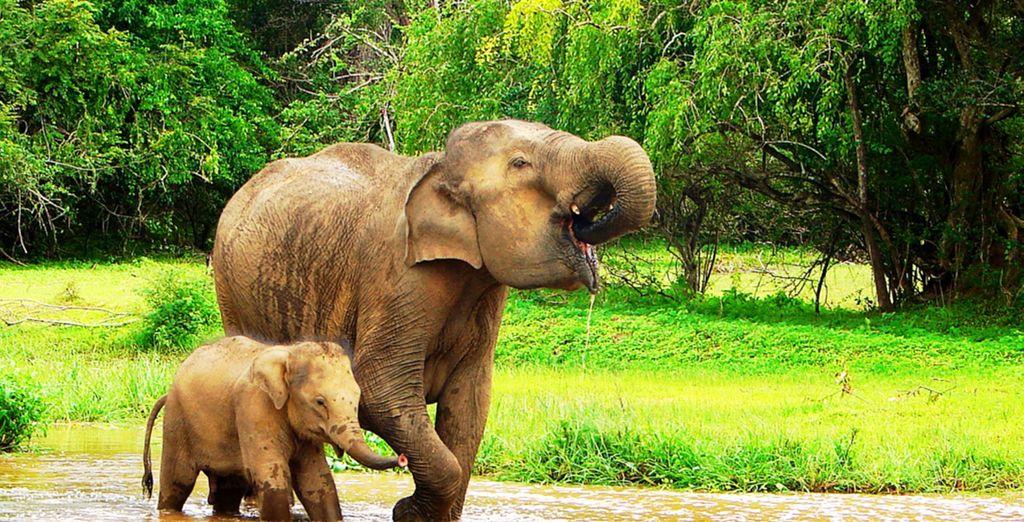 Ce voyage sera l'occasion d'approcher les éléphants à l'orphelinat de Pinnawela