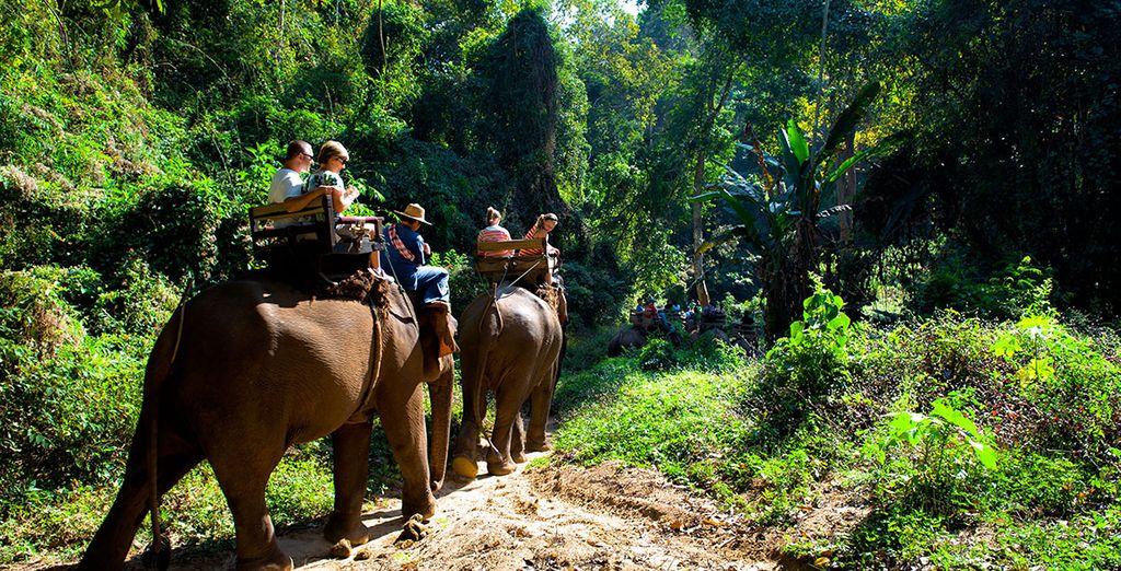 Royaume des éléphants!