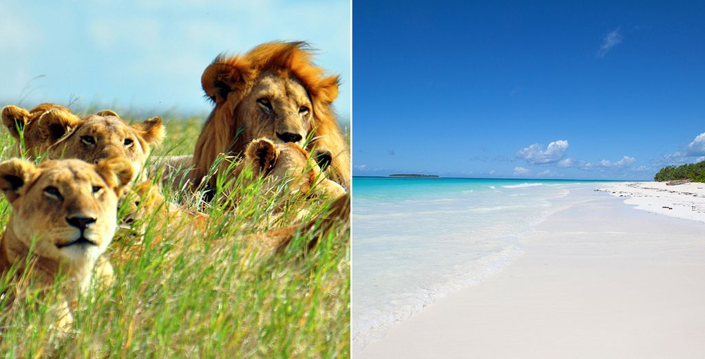 Laissez-vous tenter par un voyage inoubliable sur l'archipel de Zanzibar, et craquez pour notre offre avec safari inclus...