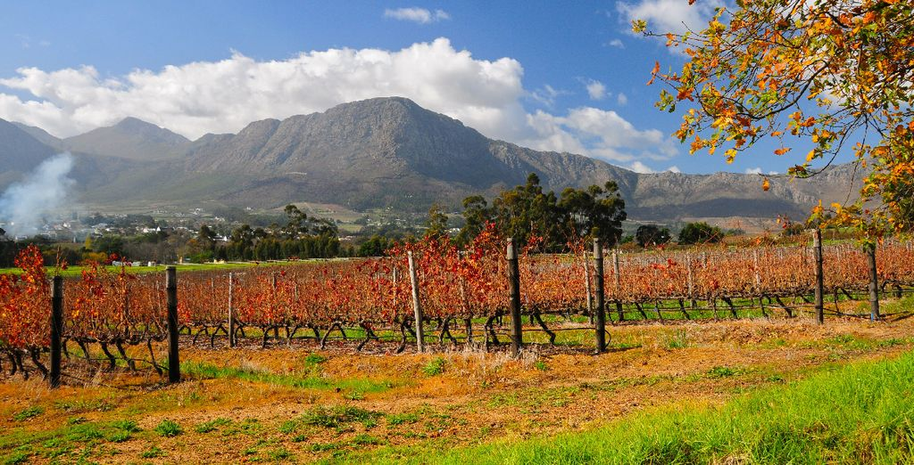 Partez en excursion sur la route des vins