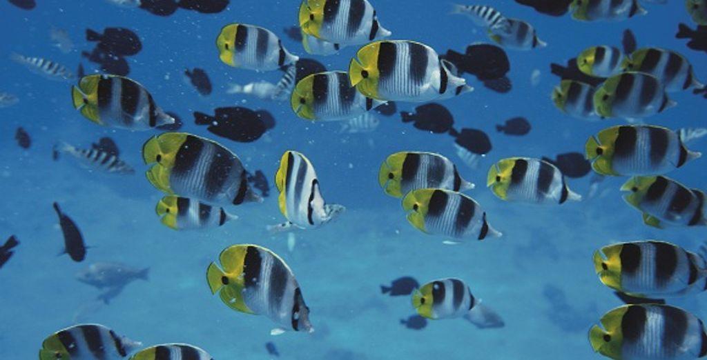 Découverte de la faune sous-marine...