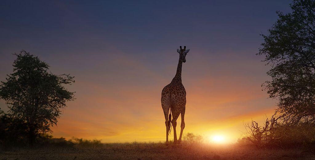 Envie de découvrir la magie du Cap et de l'Afrique du Sud? - Safari de Luxe en Afrique du Sud en Lodge & hôtels 4* et 5* en 9 jours / 8 nuits Johannesburg
