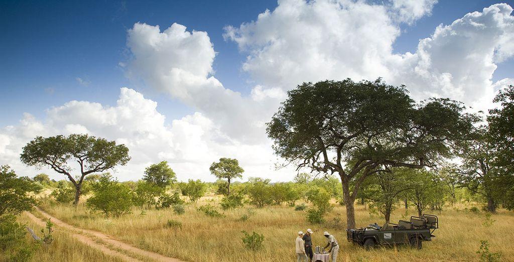 Partez en Safari dans la réserve Ngala