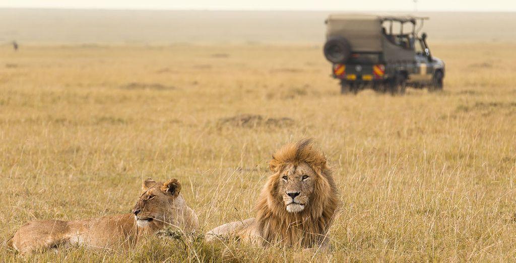 Observez la faune sauvage, dont le légendaire Big Five...